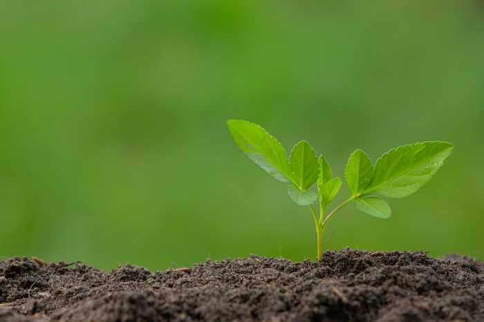 小さな苗木が土から芽を出している