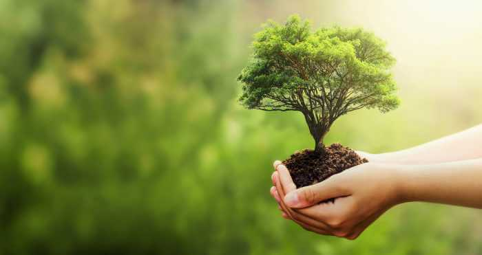 自然の中で両手で苗木の根っこを持っている