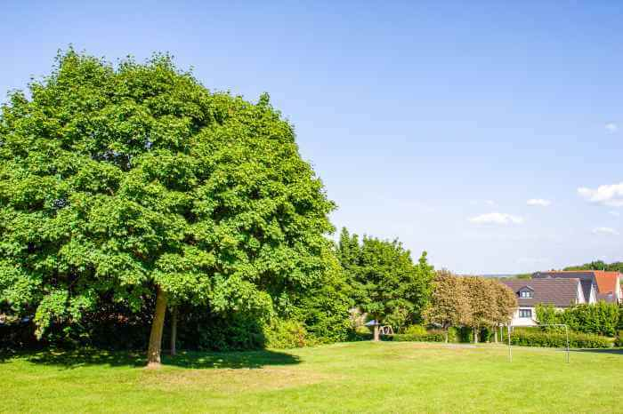 田舎の草原の周辺に大きな木や家が建っている